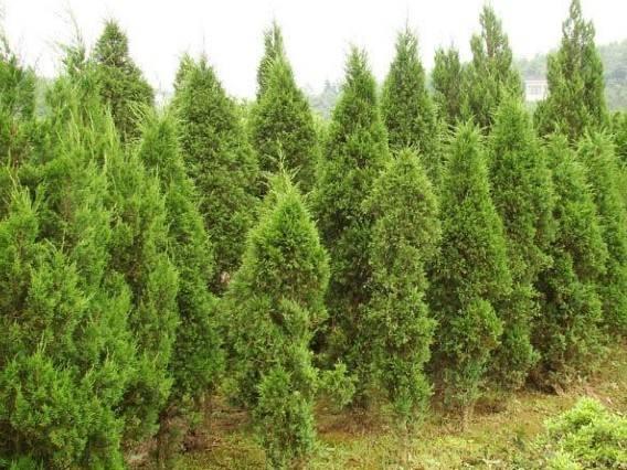 园林景观设计 绿化修剪养护 花卉绿化租摆