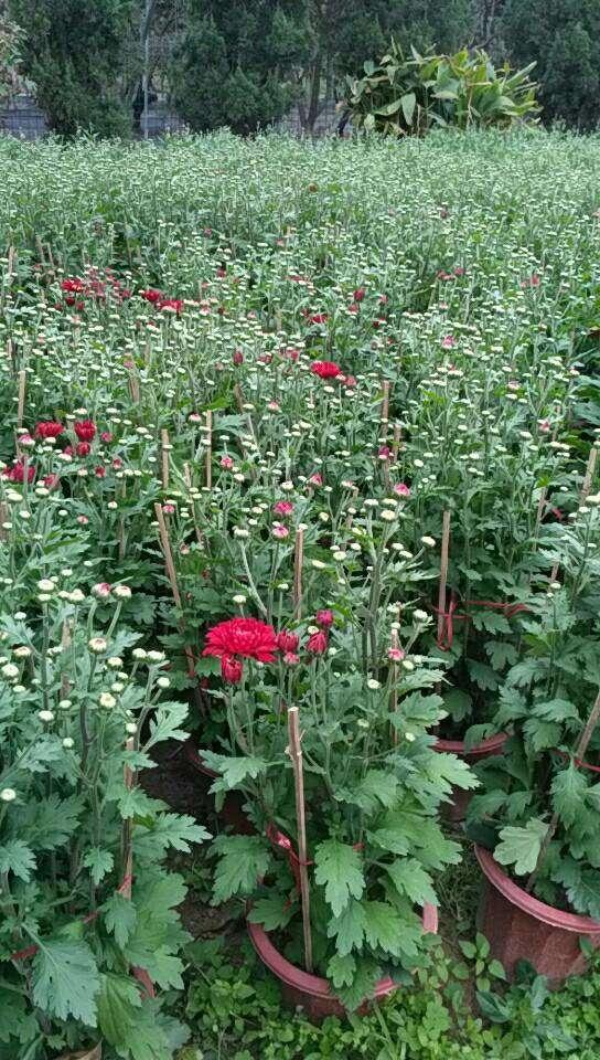 园林景观设计|绿化修剪养护|花卉绿化租摆