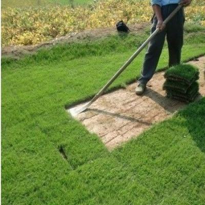 草坪种植修剪